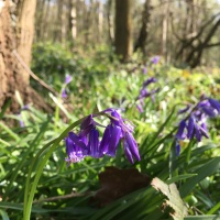 Searching for bluebells - watching the seasons with children