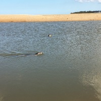 Norfolk Tour: Watching wild seals at Wells-next-the-Sea
