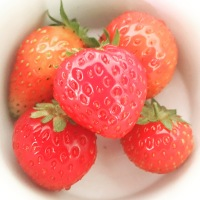 The Garden in late June: Strawberries, flowers and the slow-growing winter harvest