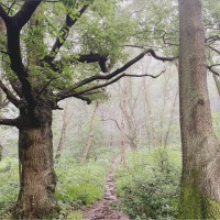 An English Summer:  Early morning mists in the old forest