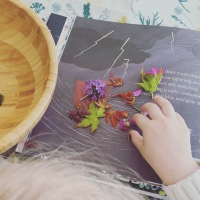 A Week in Books: Bonfires, bee bread and poetry with petals