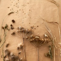 Hints of Autumn: Collecting wild seeds and finding inspiration